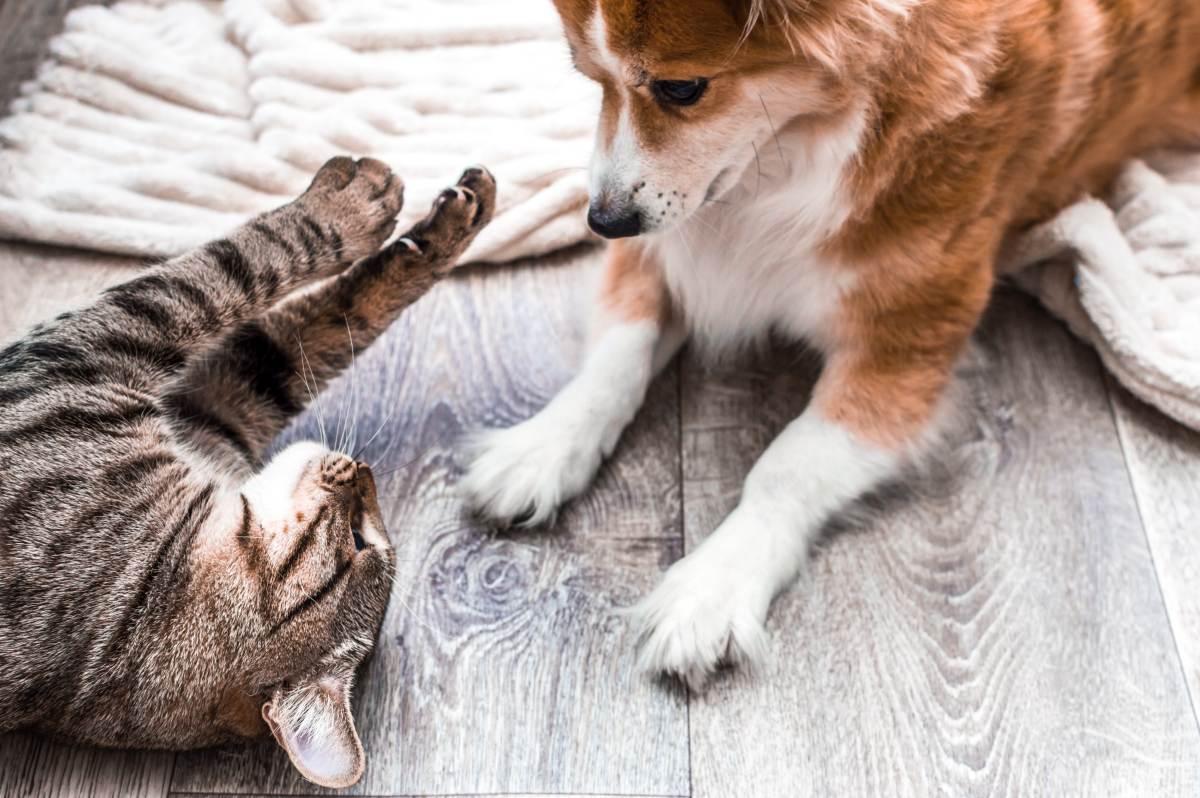 hund und katze  wie passt das zusammen