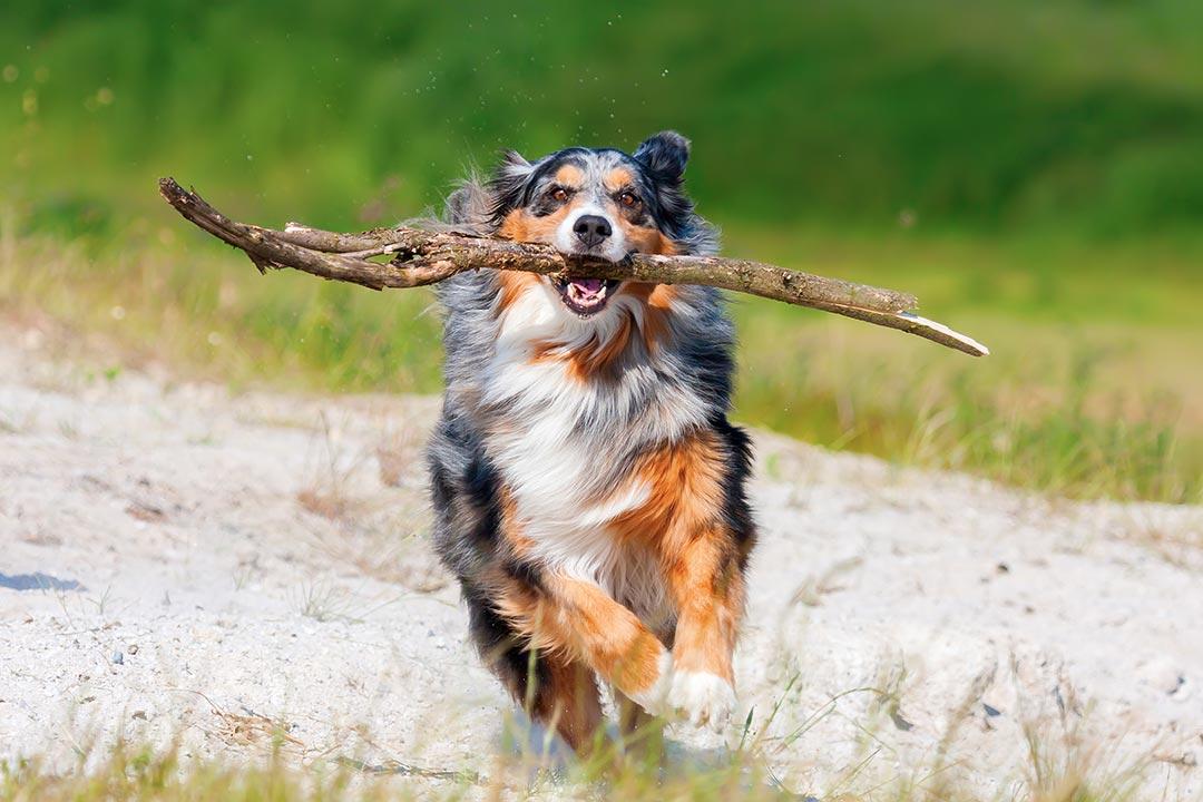Hund Aus Dem Tierheim Erfahrungen